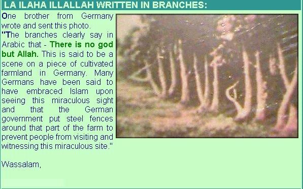 allah[b] first pillar of islam kalima e shahadat in tree