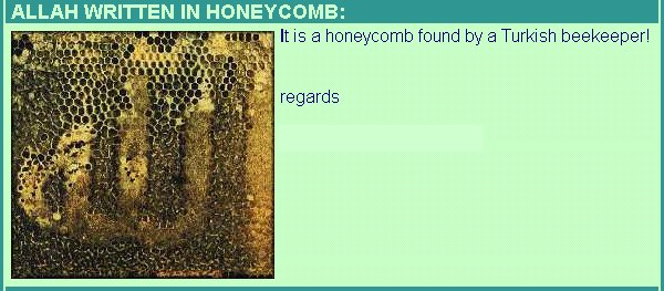 allah[c] THE HONEY BEE REMEMBERING ALLAH AZAWAJAL