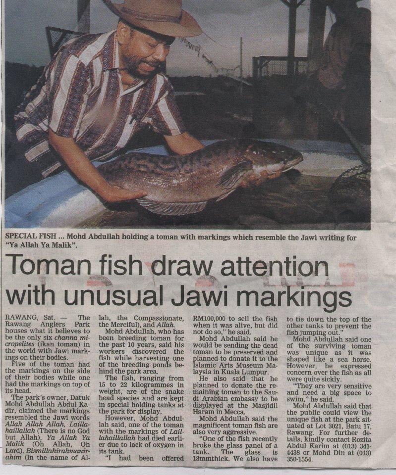 TOMAN FISH HAVING ALLAH!S NAME BY BIRTH